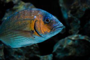 la biodiversité marine encouragée à marseille